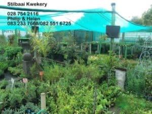 Stilbaai Kwekery / Nursery