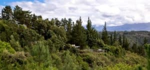 Forest Valley Self Catering Cottages