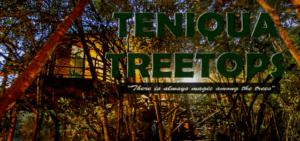 Teniqua Treetops Tented Tree House Resort