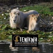 Tenikwa Wildlife Centre