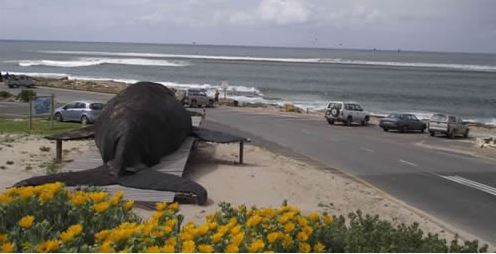 The Whale Induna