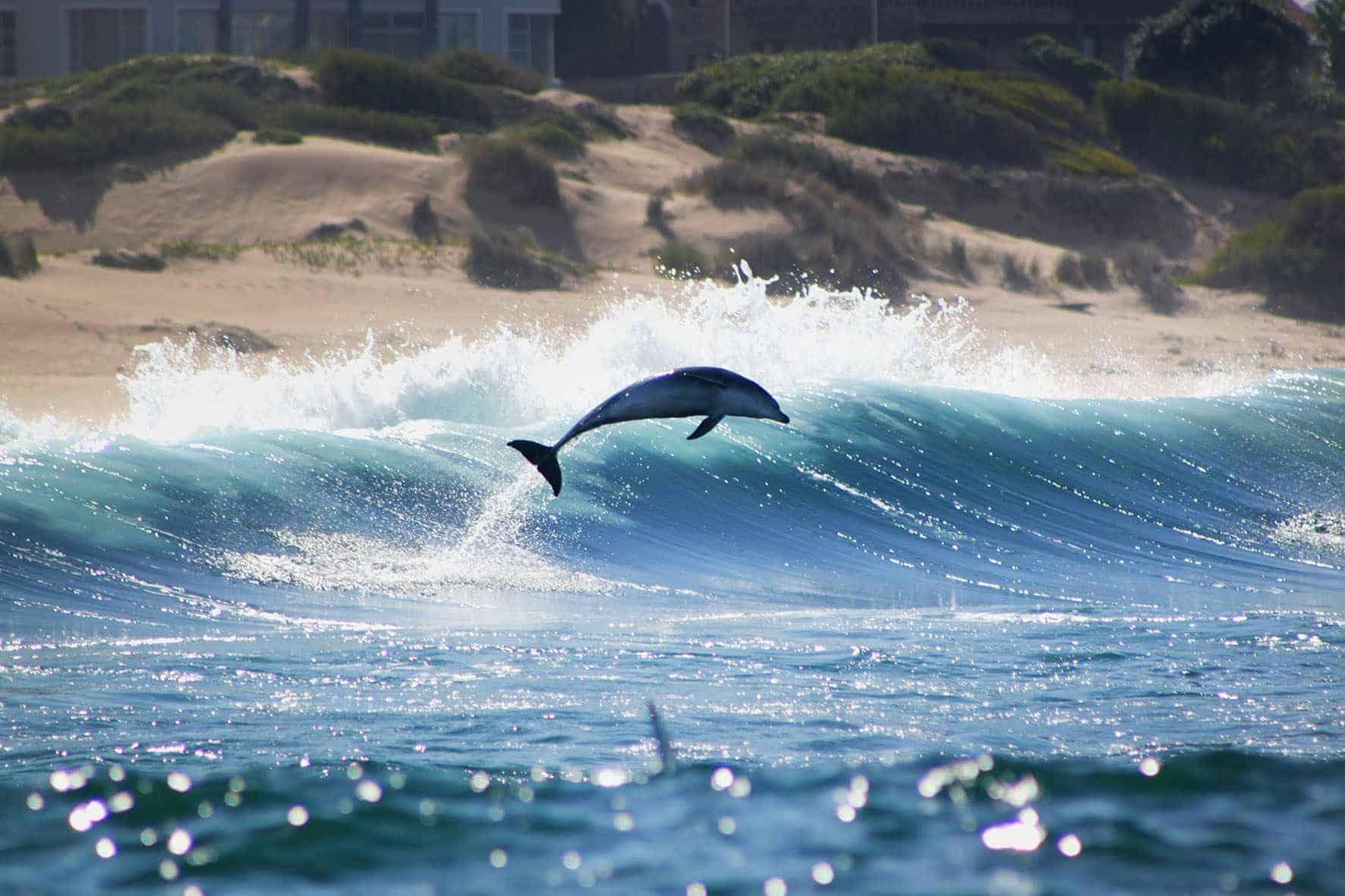 Mossel Bay Marine Life