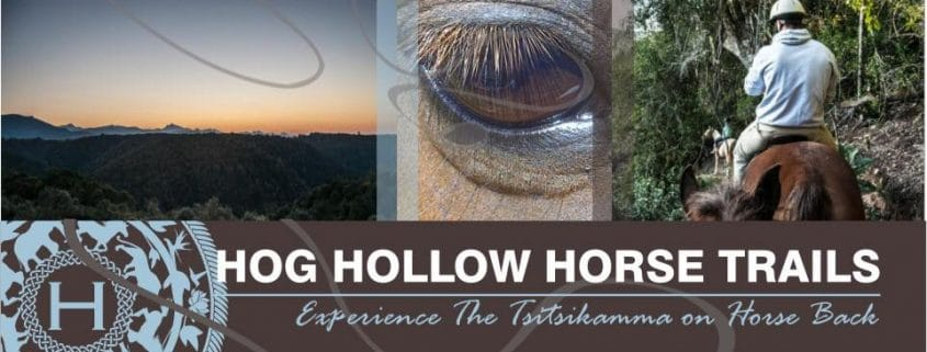 Hog Hollow Horse Trails